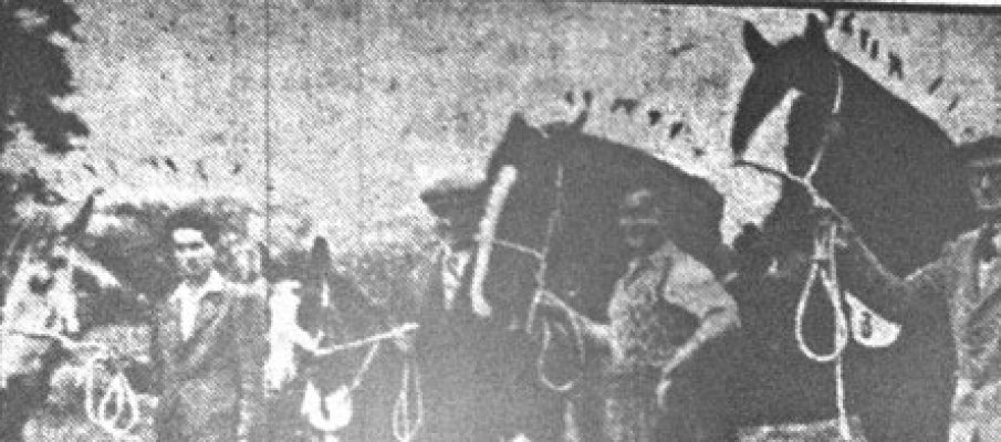 1954-launceston-horse-show-with-the-horses-and-foals