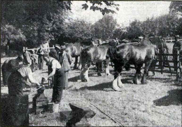 horseshoeing-contest-at-launceston-horse-show-the-15th-of-june-1950