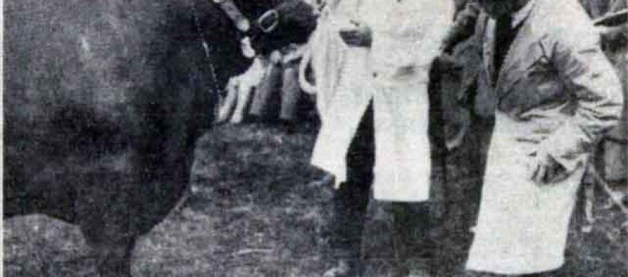 launceston-show-1938-bull-judging