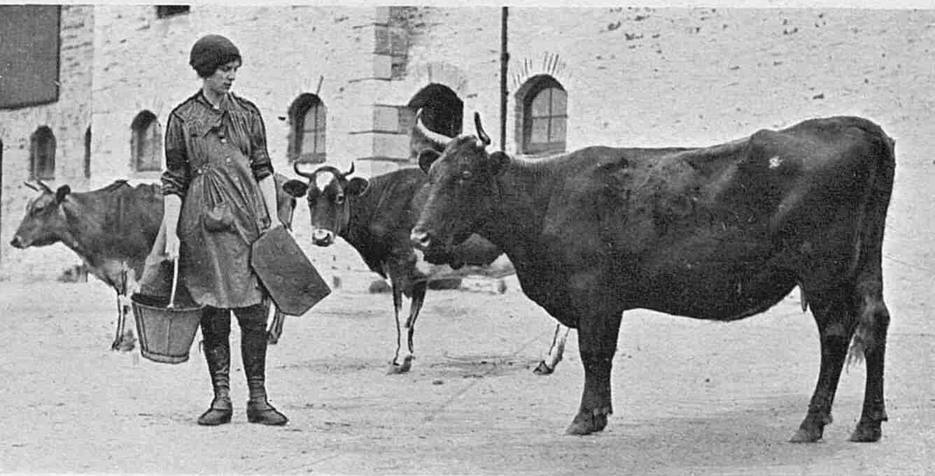 Miss C. Matheson at work for the Womens Volunteer Land Army at Home Farm, Stoke Climsland in 1917