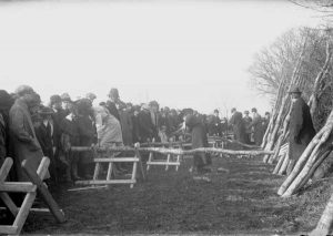 Women compette in a hedge laying competition at Scarne Farm, Launceston during the First World War.