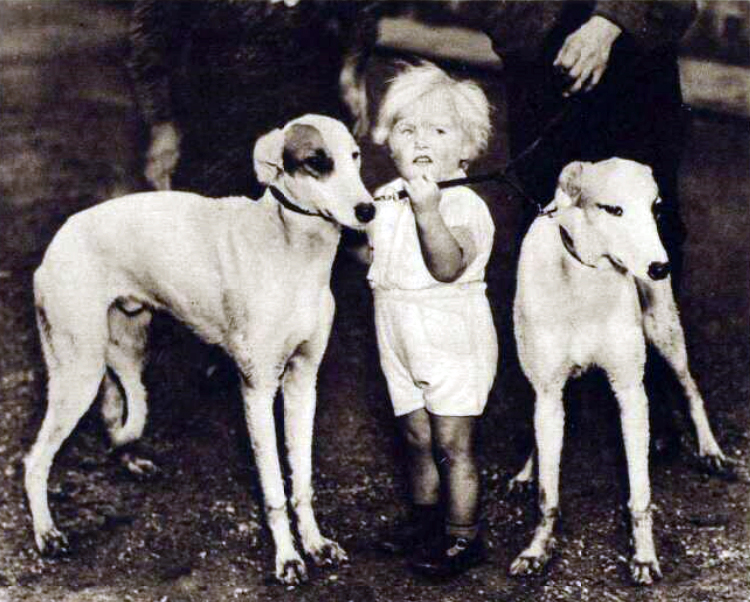 Spot and Nimble the two greyhounds presented to King George in 1937 seen here with their owners son Kenneth Hodge then aged 2