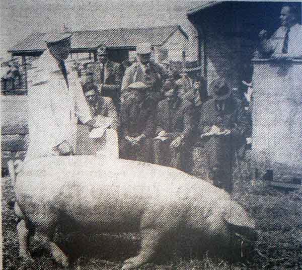 cornwall-and-devon-pig-breeders-association-spring-show-and-sale-at-launceston-market-in1958
