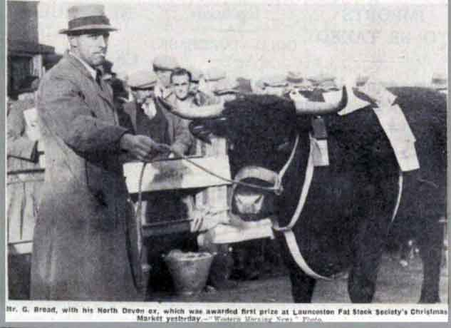 g-broad-with-his-prizwinning-bull-at-the-1936-launceston-fatstock-christmas-show