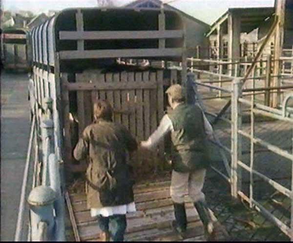 launceston-cattle-market-4