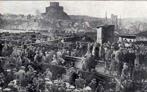 launceston-cattle-market-december-1931