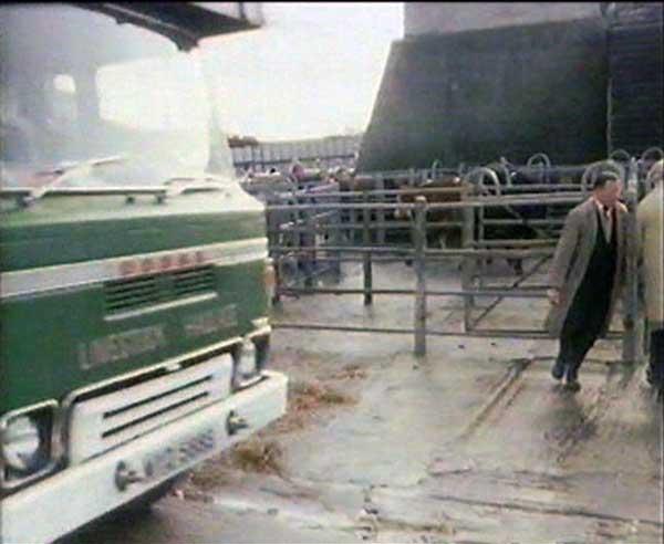 launceston-cattle-market