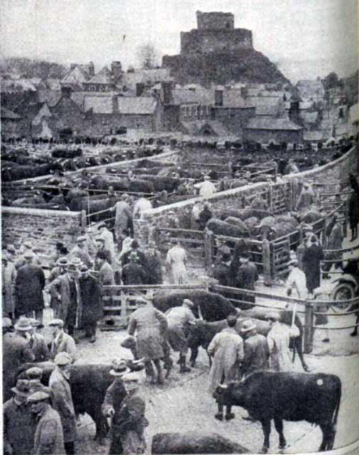 launceston-christmas-fatstock-show-st-leonards-fair-1935