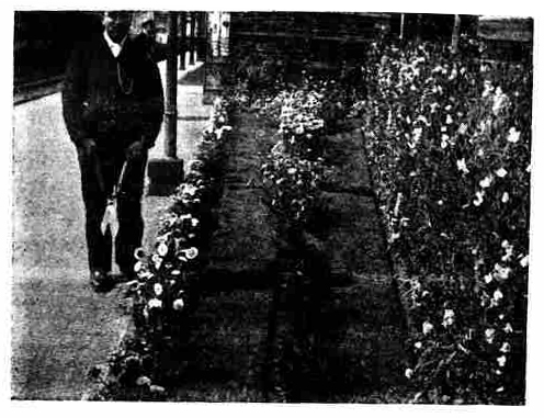 Mr. Rogers of the Parcel Dept at Launceston Station seen here in front of his Station garden in September 1905.