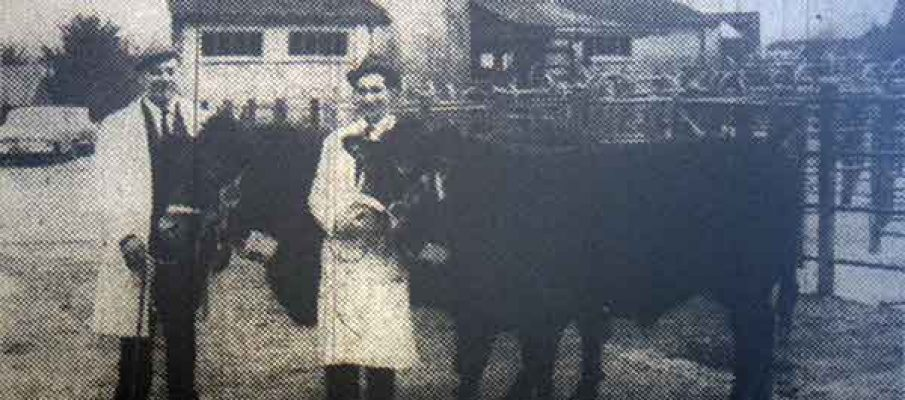 seth-davey-and-bernard-tucker-with-their-prizewinning-cattle-at-the-1968-launceston-christmas-fatstock-show