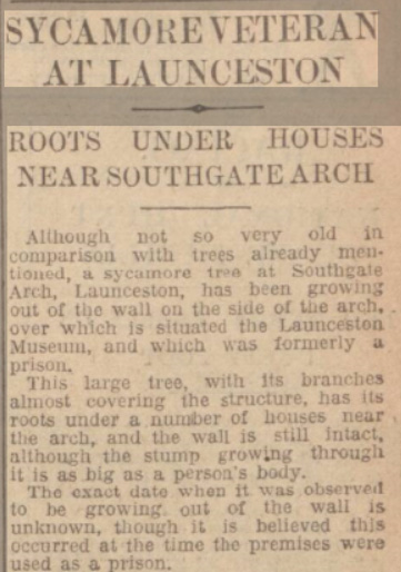 southgate-arch-sycamore-tree-article-from-the-western-morning-news-09-march-1933