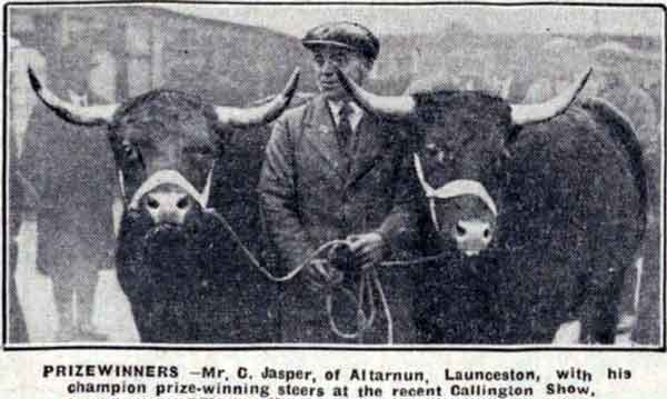 C. Jasper of Altarnun with his 1932 prize winning streers at the Callington Show.