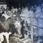 Five Lanes Market in 1961.